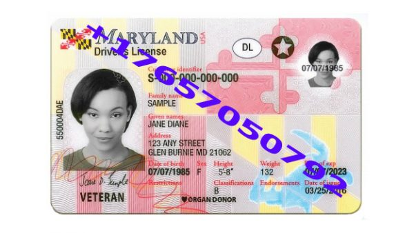 , MARYLAND ID (Drivers License)